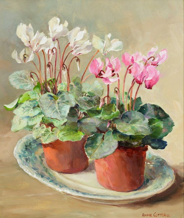 Anne Cotterill Sale